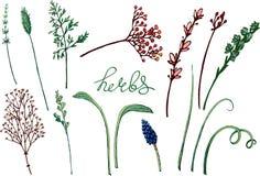 Blom- illustration för vektor med örter stock illustrationer