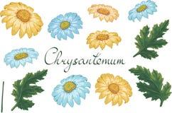 Blom- illustration för vektor med krysantemumet Isolerade best?ndsdelar p? en vit bakgrund Gul och blå guld--tusensköna för ditt royaltyfri illustrationer