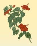 blom- illustrationvektor för bakgrund Royaltyfri Fotografi