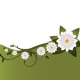 blom- inbjudanvektor för bakgrund Arkivbild