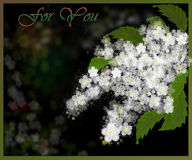 Blom- kort för dig Arkivbilder
