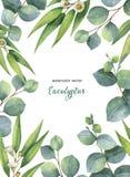 Blom- kort för vattenfärgvektorgräsplan med eukalyptussidor och filialer på vit bakgrund vektor illustrationer