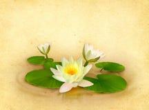 Blom- kort med den härliga näckrosteckningen Royaltyfri Foto