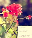Blom- kortdesigh Royaltyfria Bilder
