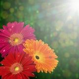Blom- kortmall Arkivfoto