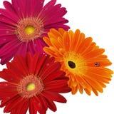 Blom- kortmall Royaltyfri Bild
