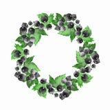 Blom- krans 5 för vattenfärg svart current Royaltyfria Foton