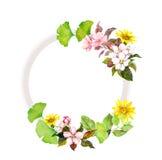 Blom- krans med blommor Vattenfärgram Arkivfoton