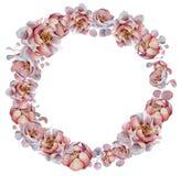 Blom- kransar för vattenfärg med bandet för din text banret är kan olika blom- använda illustrationavsikter bröllop för romantisk Arkivfoton