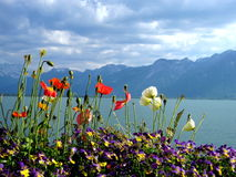 Blom- kust på sjöGenève, Schweiz Arkivbild