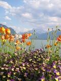 Blom- kust på sjöGenève, Schweiz Arkivfoton