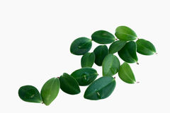 blom- leaves Arkivfoto