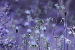 Blom- lila-blått bakgrund Violetta vildblommor på en bokehbakgrund Närbild slapp fokus arkivfoto