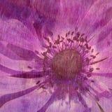 blom- lila textur Royaltyfria Bilder