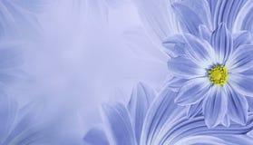 Blom- ljus - blå härlig bakgrund Blommasammansättning av blommatusenskönan placera text Royaltyfria Foton