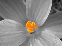 blom- makrovärld Royaltyfri Fotografi