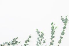 Blom- modell av eukalyptussidor som isoleras på vit bakgrund Lekmanna- lägenhet, bästa sikt royaltyfria foton