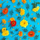 Blom- modell av gula och röda blommor på blå bakgrund Lekmanna- lägenhet, bästa sikt vektor för detaljerad teckning för bakgrund  Royaltyfria Foton