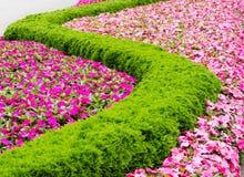 Blom- modell i en parkera Arkivfoto