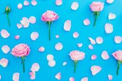 Blom- modell med rosa rosknoppar och kronblad på blå bakgrund Lekmanna- lägenhet, bästa sikt Sammansättning för vårtid Royaltyfria Bilder