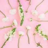 Blom- modell med vita blommor på rosa bakgrund Lekmanna- lägenhet, bästa sikt vektor för detaljerad teckning för bakgrund blom- Arkivbilder