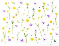 Blom- modell som göras av isolerade ängblommor på vit bakgrund Lekmanna- lägenhet royaltyfria bilder