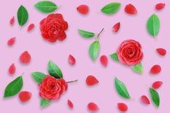 Blom- modell som göras av röda kamelior och gröna sidor, branche Royaltyfri Foto