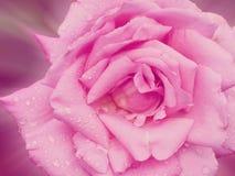 Blom- modeller, alla sorter av färgrik tappning Royaltyfri Bild