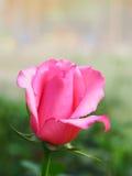 Blom- modeller, alla sorter av färgrik tappning Royaltyfri Foto