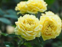 Blom- modeller, alla sorter av färgrik tappning Arkivfoto