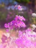 Blom- modeller, alla sorter av färgrik tappning Arkivfoton