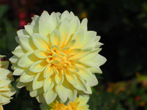 Blom- modeller, alla sorter av färgrik tappning Royaltyfria Bilder
