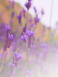 Blom- modeller, alla sorter av färgrik tappning Fotografering för Bildbyråer
