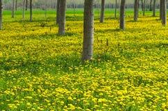 Blom och respiratoriska allergier Royaltyfri Foto
