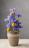 Blom- ordning med blåklinter och craspedias Royaltyfri Foto