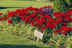 Blom- ordningar framme av Buckingham Palace Royaltyfri Fotografi