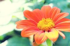 Blom på en solig eftermiddag Arkivbild