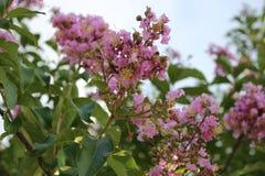 blom planterade var dig Royaltyfri Fotografi