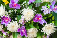 Blom- plast- bakgrund för garnering Royaltyfria Foton
