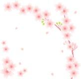 blom- prydnad sakura Royaltyfria Bilder