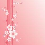 blom- prydnad sakura Arkivfoton
