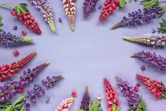 Blom- purpurfärgad bakgrund med lupin, bästa sikt Royaltyfri Foto