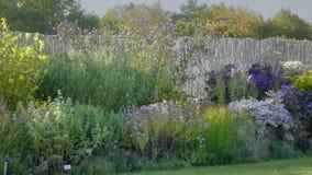 Blom- rabatt med färgrika blommor Slösa, guling- och vitkronblad, rött Halva-skjutit skott av växtordningar på solnedgången stock video