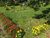 Blom- rader av gula och röda ringblommor Arkivbild
