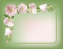 blom- ram Royaltyfri Foto