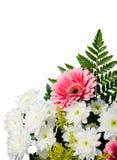blom- ram Fotografering för Bildbyråer