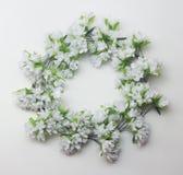 Blom- ram för cirkel av vita blommor Royaltyfri Fotografi