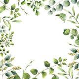 Blom- ram för vattenfärg Hand målat växtkort med eukalyptus-, ormbunke- och vårgrönskafilialer som isoleras på vit royaltyfri illustrationer