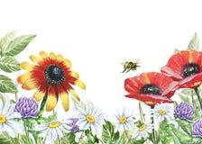 Blom- ram för vattenfärg med vallmo, växt av släktet Trifolium, kamomillar och biet Fotografering för Bildbyråer