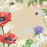 Blom- ram för vattenfärg med vallmo, växt av släktet Trifolium, kamomillar och biet Arkivbilder